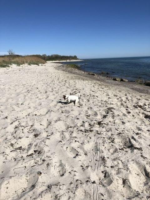 Naturstrand Wulfen , Hund erlaubt