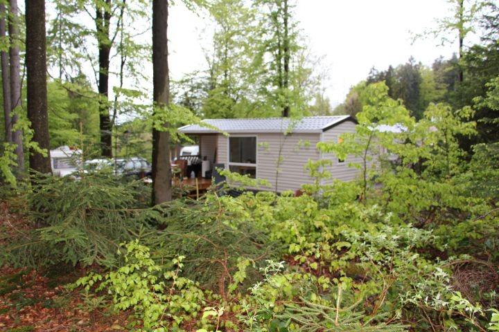Blick vom Wald auf den Campingplatz