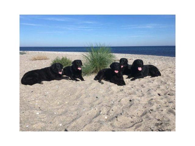 Die tierische Strand Gang