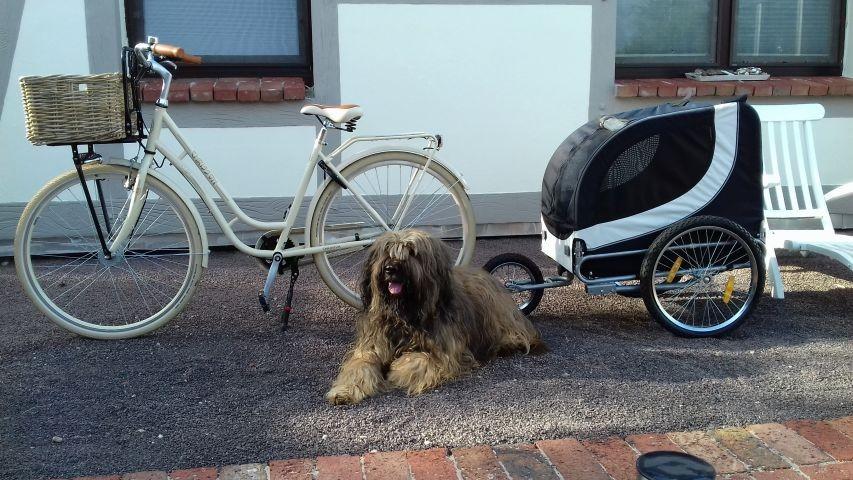 Unser Fahrradverleih mit Hundeanhänger