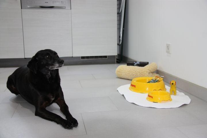 unsere Mia und Futternäpfe für Ihren Hund