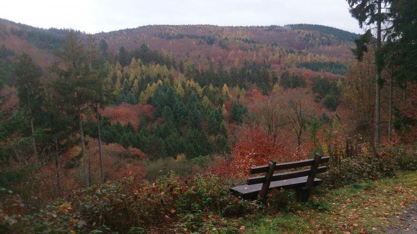 Einer der vielen Ruhebänke im Wald rund um das Drachenhaus