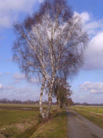 Huntloser Moor, weites flaches Land