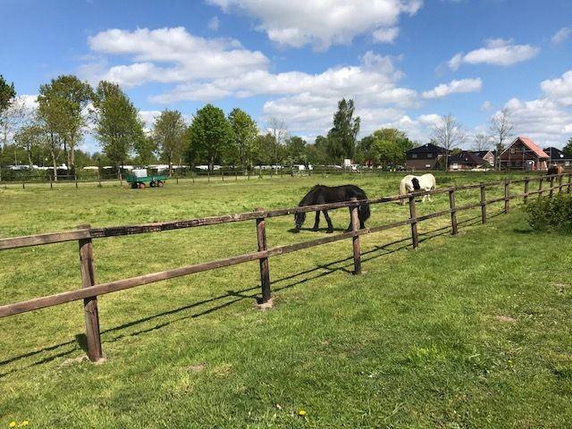 Pferdewiese direkt vor dem Ferienhaus