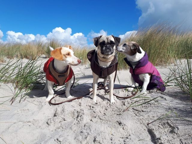 Drei Mädls auf Urlaub
