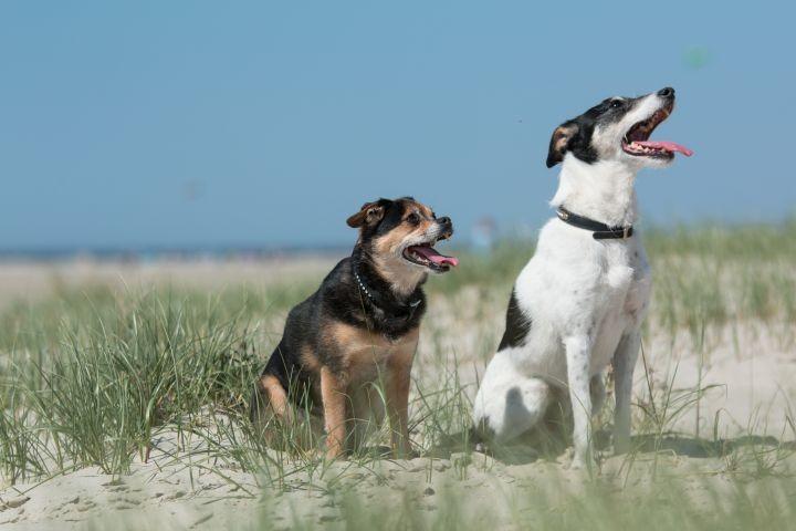 Hunde wohnen kostenlos