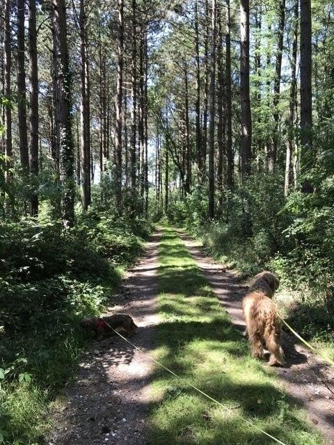 Fußläufig ereichbar,unser Altenwalder Wald