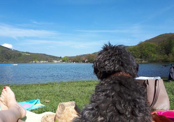 Der tolle bewirtete Hundestrand am Diemelsee eine knappe halbe Fahrstunde entfernt