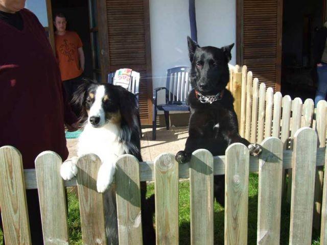 Gasthunde auf der Terrasse