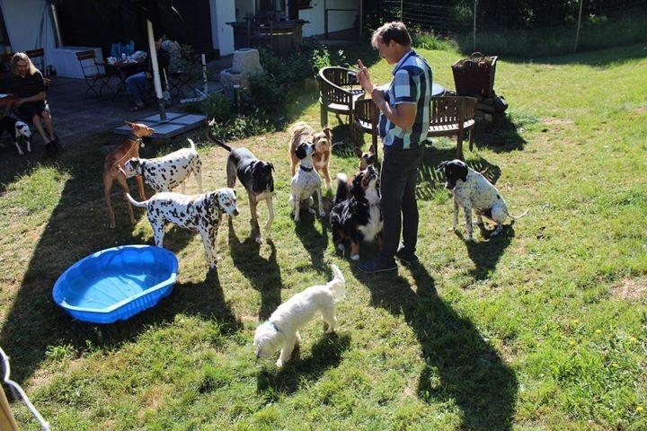Gastgarten Hundepool