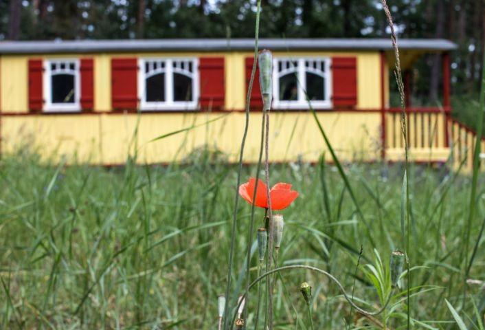 Zirkuswagen Zigappo in Lychen