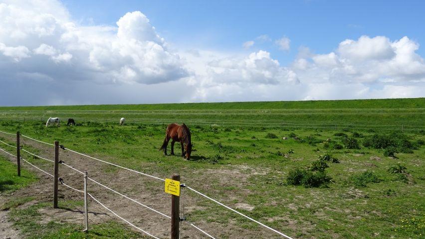 Ponyreiten im Park