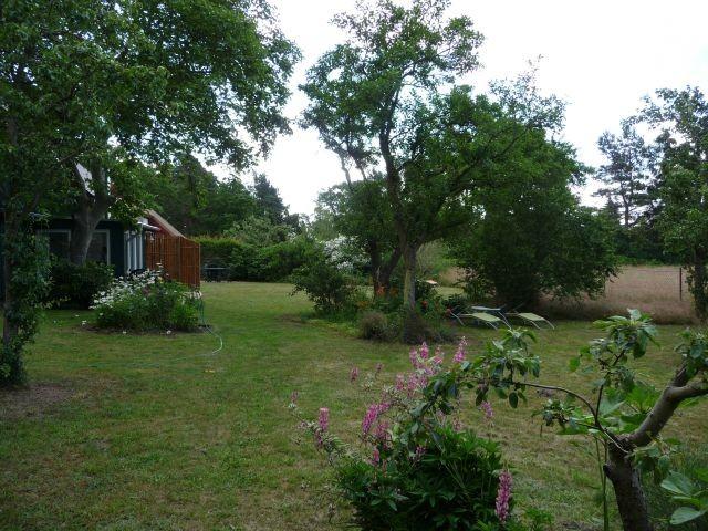 große Wiese ist eingerahmt von Pflaumenbäumen