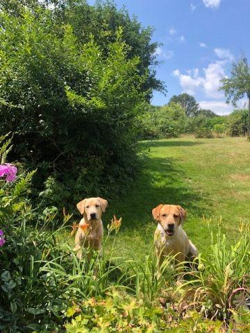 Unser Garten mit Hundebesuch
