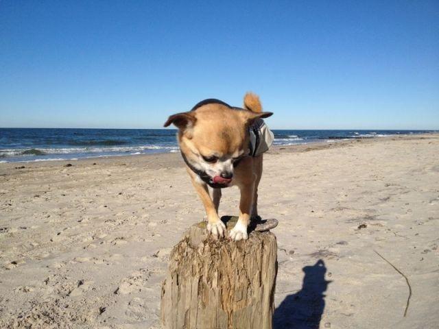 Spielen am Hundestrand