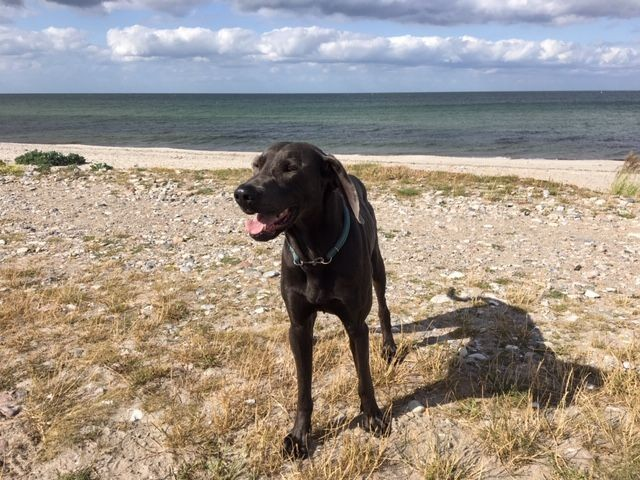 2 Hundestrände in Hohwacht