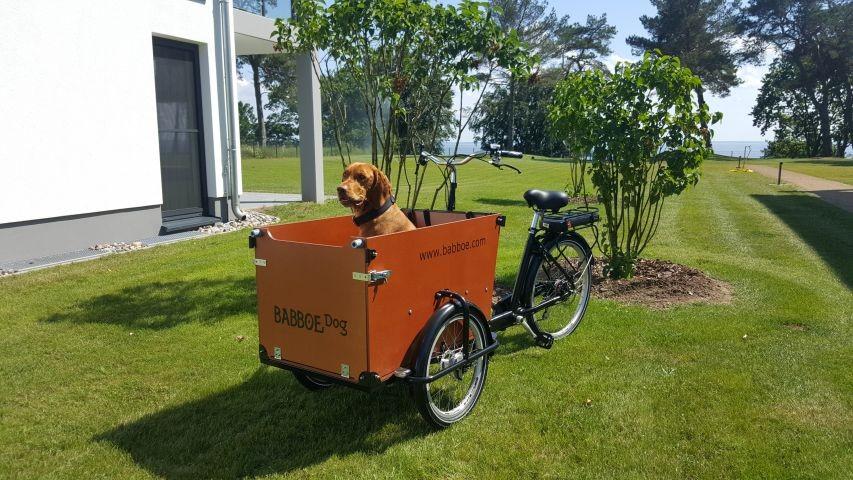 Nur bei uns - BABBOE DOG E-Bike zum Ausleihen