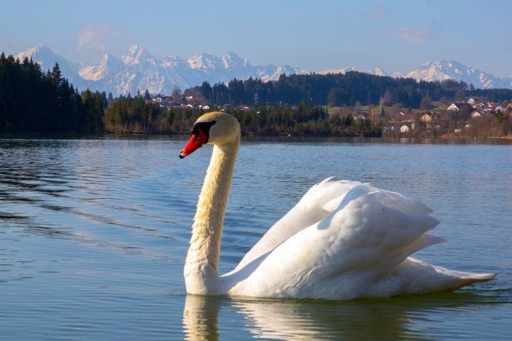 ... Lechbruck am See ... ohne Wort ...