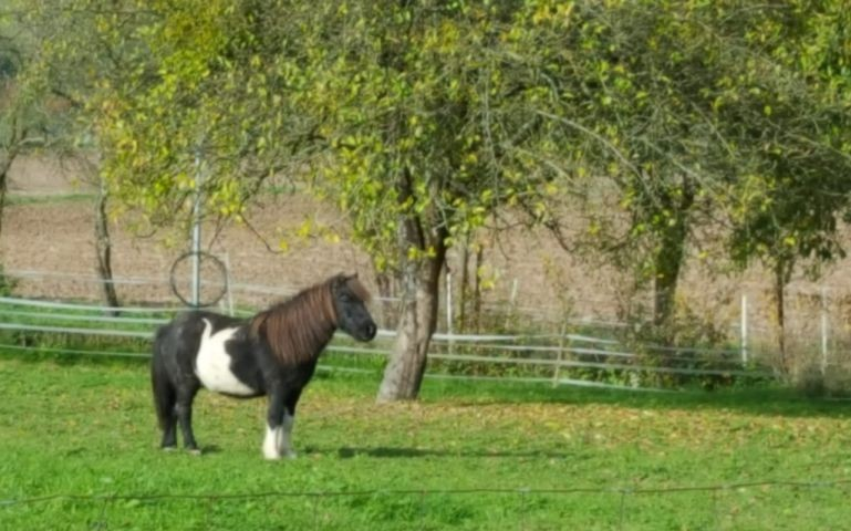 Pony  für Kinder