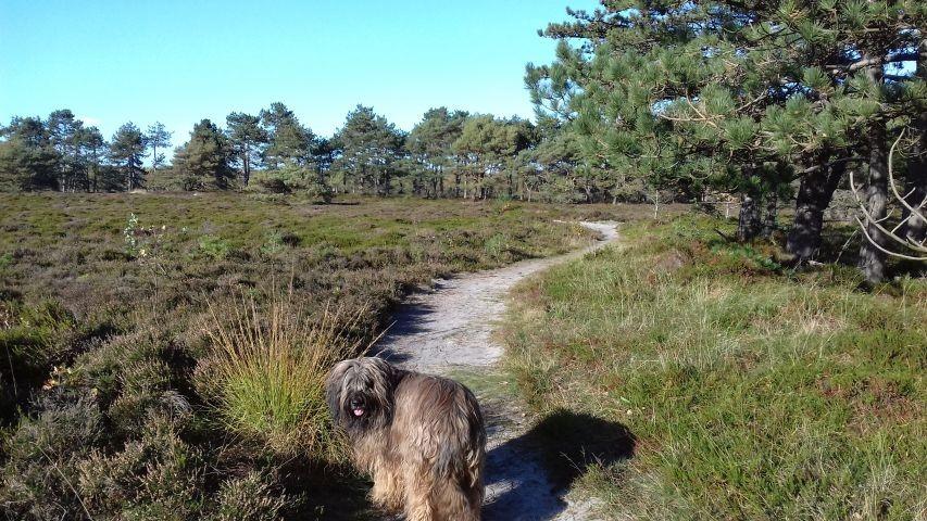 Spazieren in der Heide bei Berensch