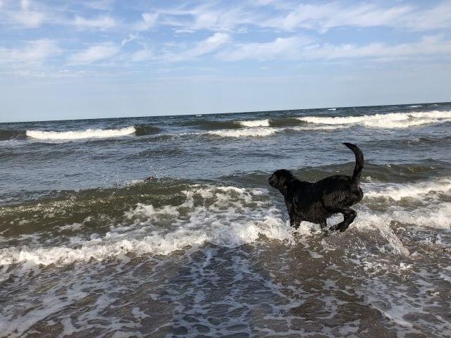 Hunde Badestrand