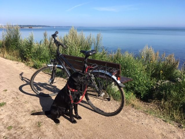 """Genießen Sie eine Radtour durch das Naturschutzgebiet """"Geltinger Birk"""""""