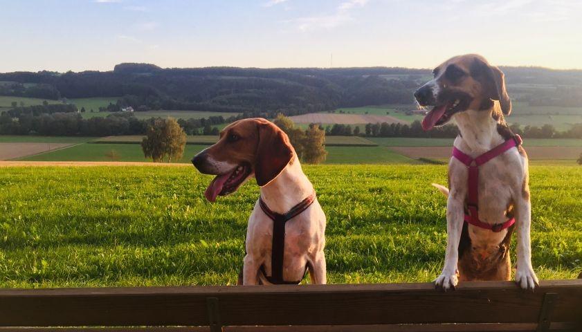 Ideal für Ferien mit Hunden