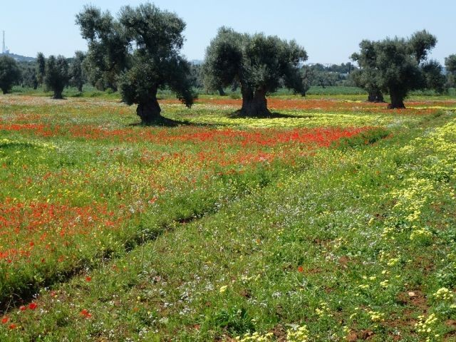 Frühling in Apulien