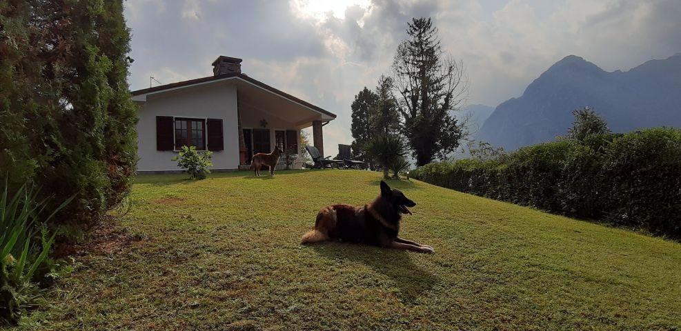 Hunde im Ferienhaus herzlich willkommen