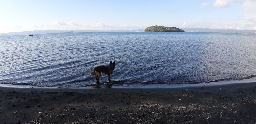 Urlaub mit Hund am Bolsenasee