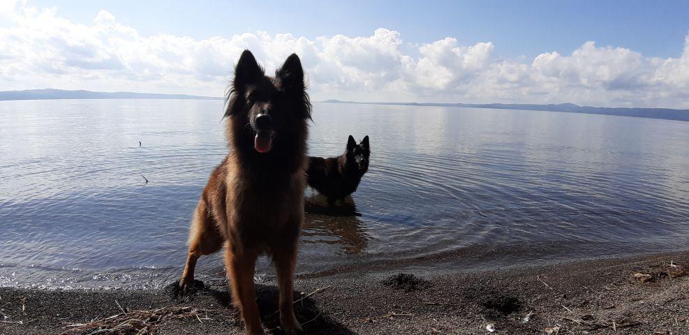 Hunde herzlich willkommen