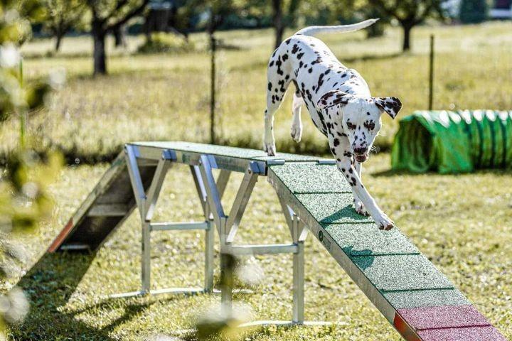 Agility Parcour und Hundeteich