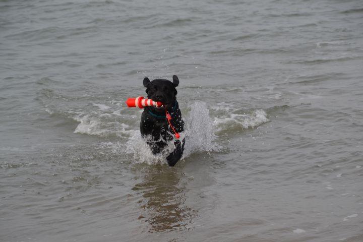 unser Hund Paul in seinem Element