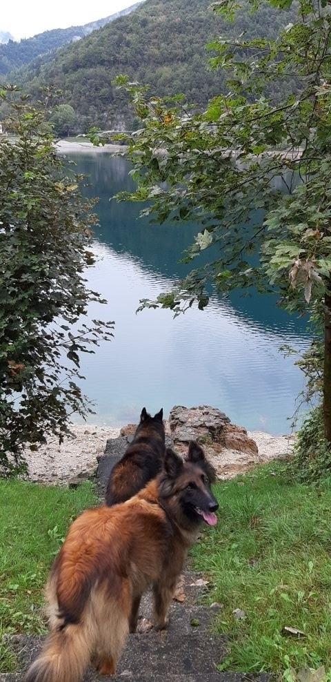 Zugang zum See