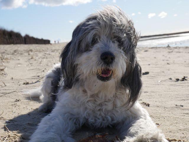 Unser Hund im Herbst am Strand von Duhnen