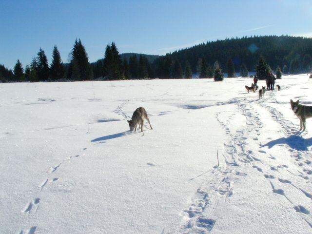 Winterwanderung mit Hund
