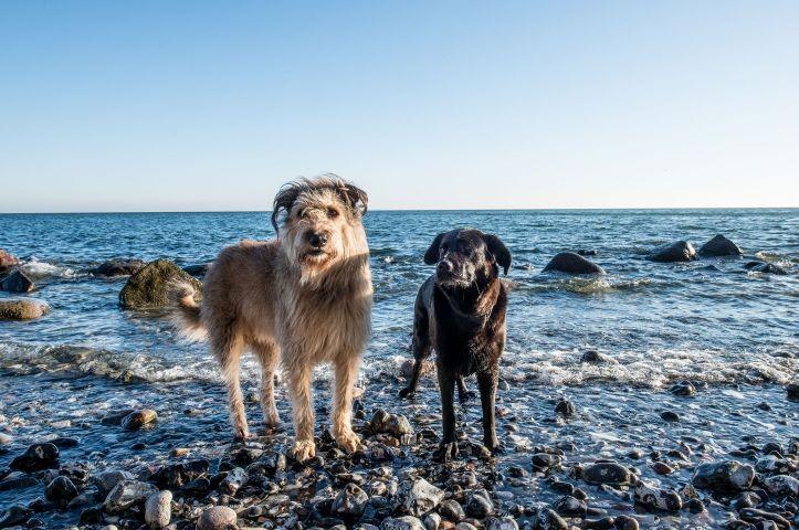 Mit Hund an die Ostseeküste