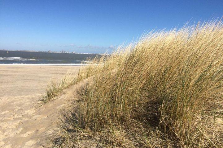 Strand Breskens mit Duennengras