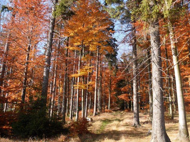 Herbstlich bunter Wald