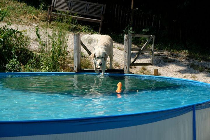 Unser Hundepool lädt zum Erfrischen ein