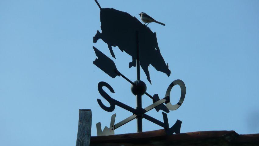 Die Wildsau auf dem Dach des Stalles