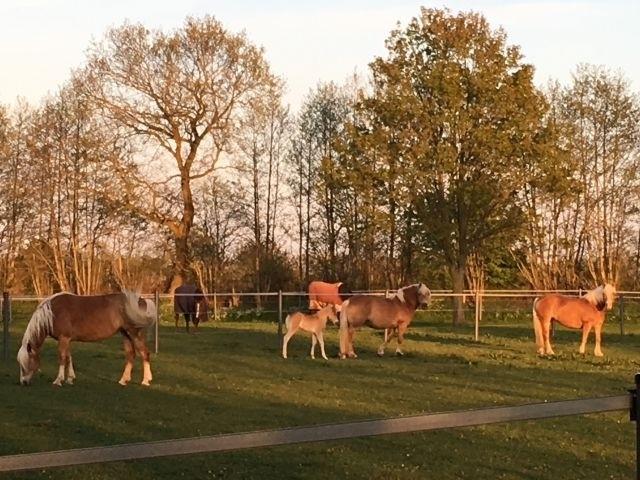 Die Pferde vom Hof....mit Fohlen
