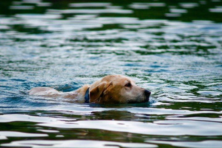 Viel Moeglichkeit zu Schwimmen