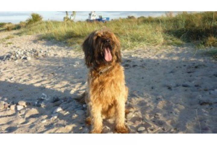 Hunde fühlen sich besonders wohl bei uns und in Hohenfelde.