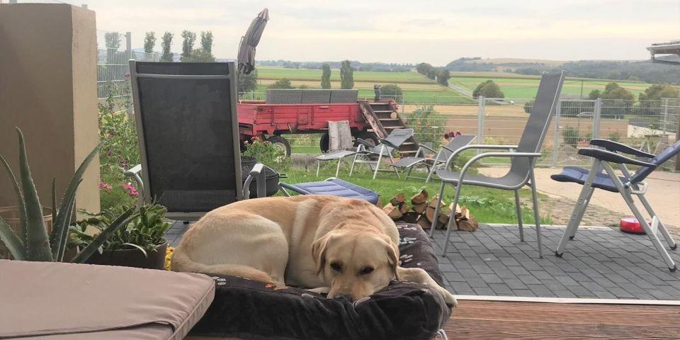 Gasthund Wolfi fühlt sich im Wellness-Pavillon auf seiner Hundeliege sehr wohl. Der Panoramablick über das Maifeld scheint ihn eher weniger zu interessieren.