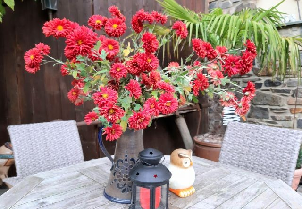 Und das lieben unsere Gäste: Der Maifelder Uhlenhorst ist nach Jahreszeit immer schön dekoriert. Blumen finden Sie selbst auf den Tischen im Innenhof.