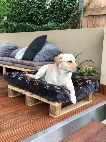 Wolfi auf der Gasthunde-Liege, die uns ein handwerklich hoch talentierter Gast gebaut hat. Nochmals herzlichen Dank! Denn so kann auch die Fellnase im Wellness-Pavillon relaxen.