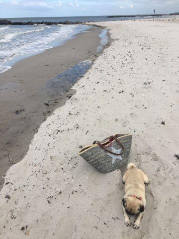 Schönberger Hundestrand