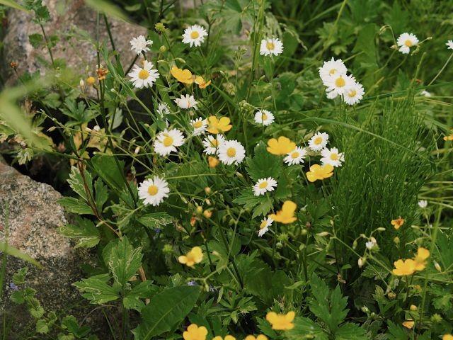 natürliche Blumen