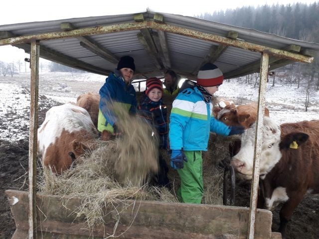 Fütterung der Rinder